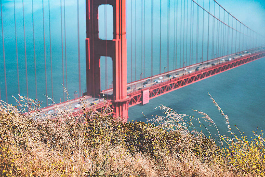 Download Grass with Golden Gate Bridge in Background FREE Stock Photo