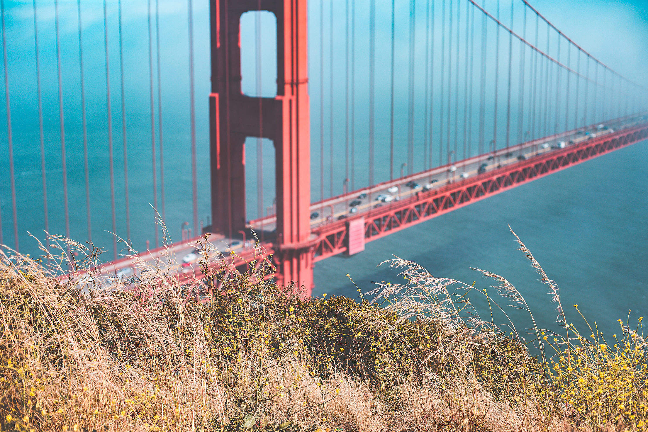 Grass with Golden Gate Bridge in Background Free Stock Photo