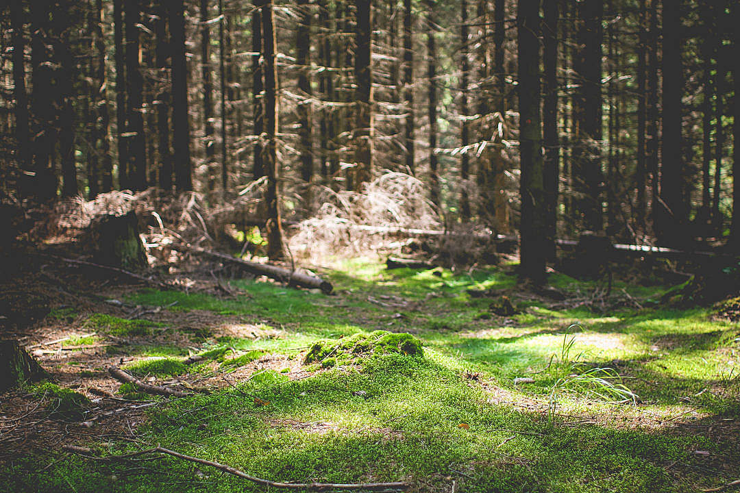 Download Green Carpet in Forest FREE Stock Photo