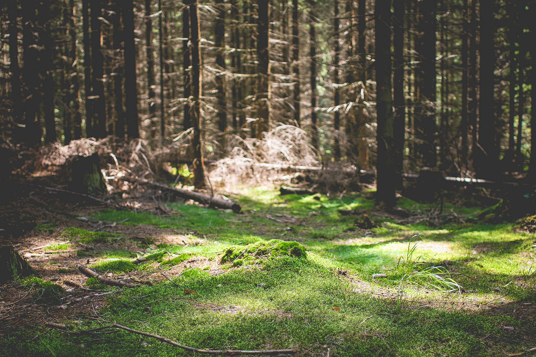 Green Carpet in Forest Free Stock Photo