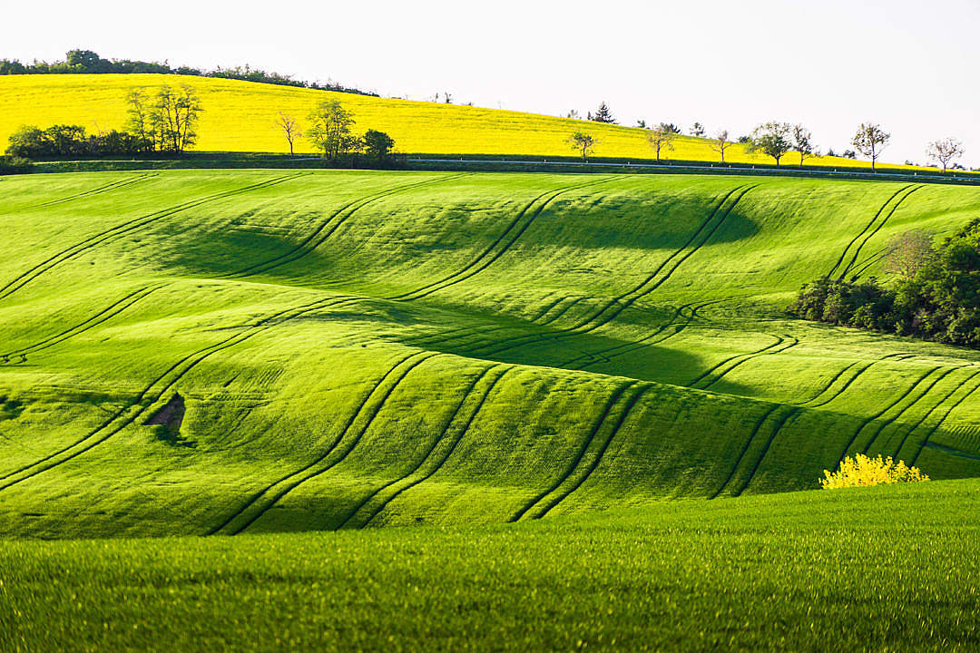 Download Green Fields FREE Stock Photo