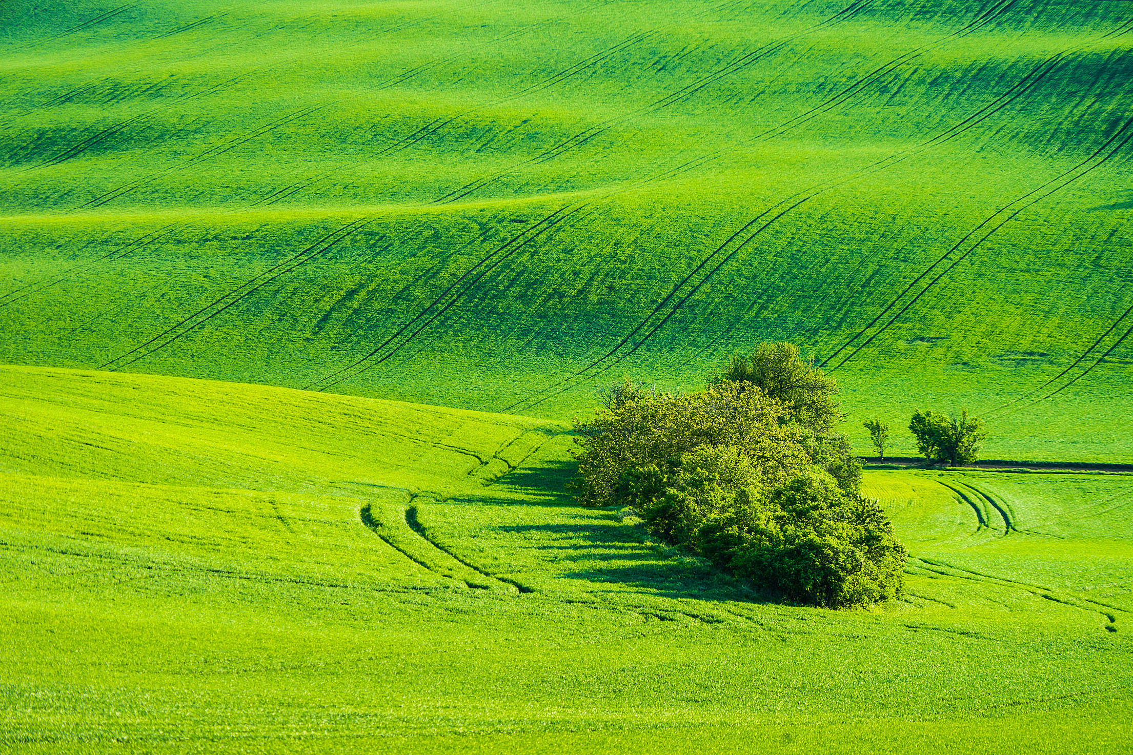 Green Fields with Wild Trees Free Stock Photo