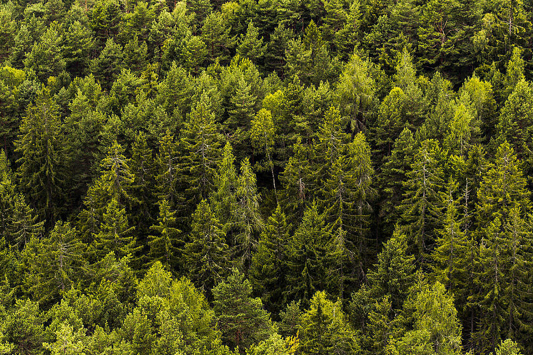 Download Green Green Forest Trees FREE Stock Photo