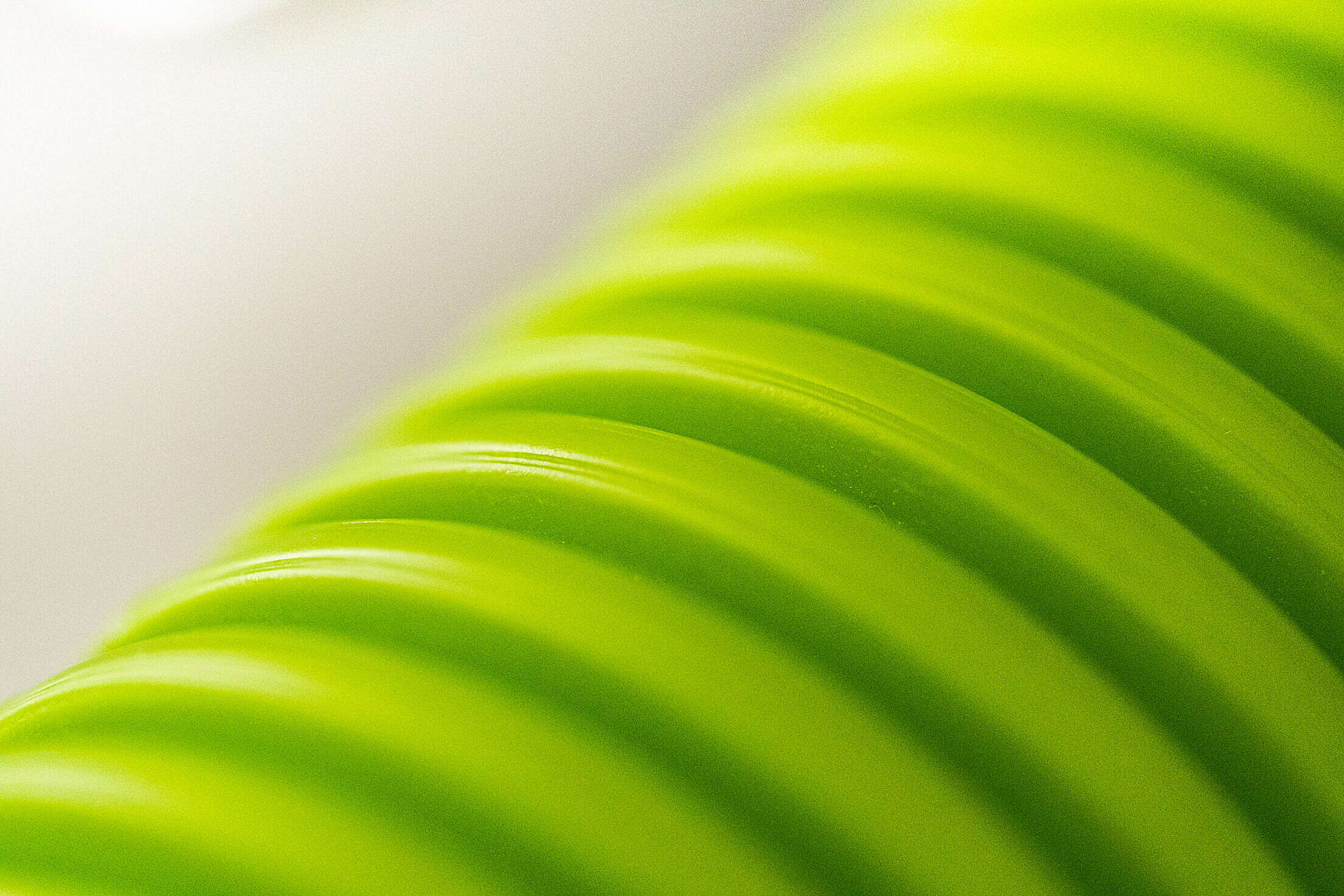 Green Hygienic Flexible Heat Recovery Ventilation Pipe Free Stock Photo