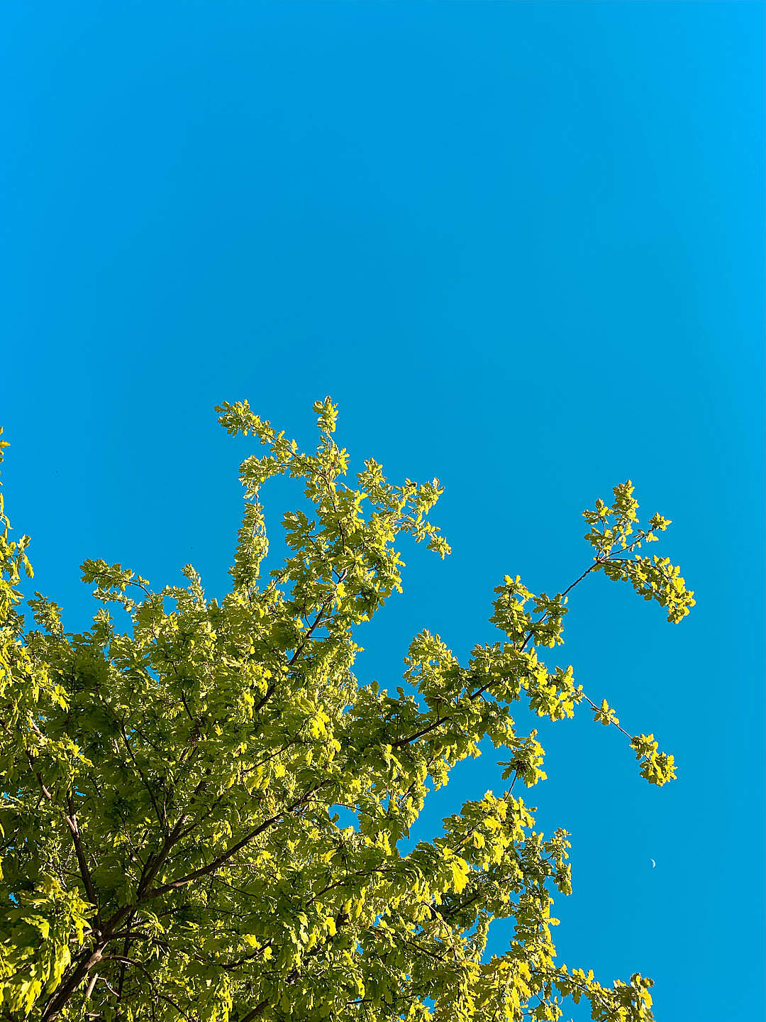 Download Green Leaves Against Bright Sky FREE Stock Photo
