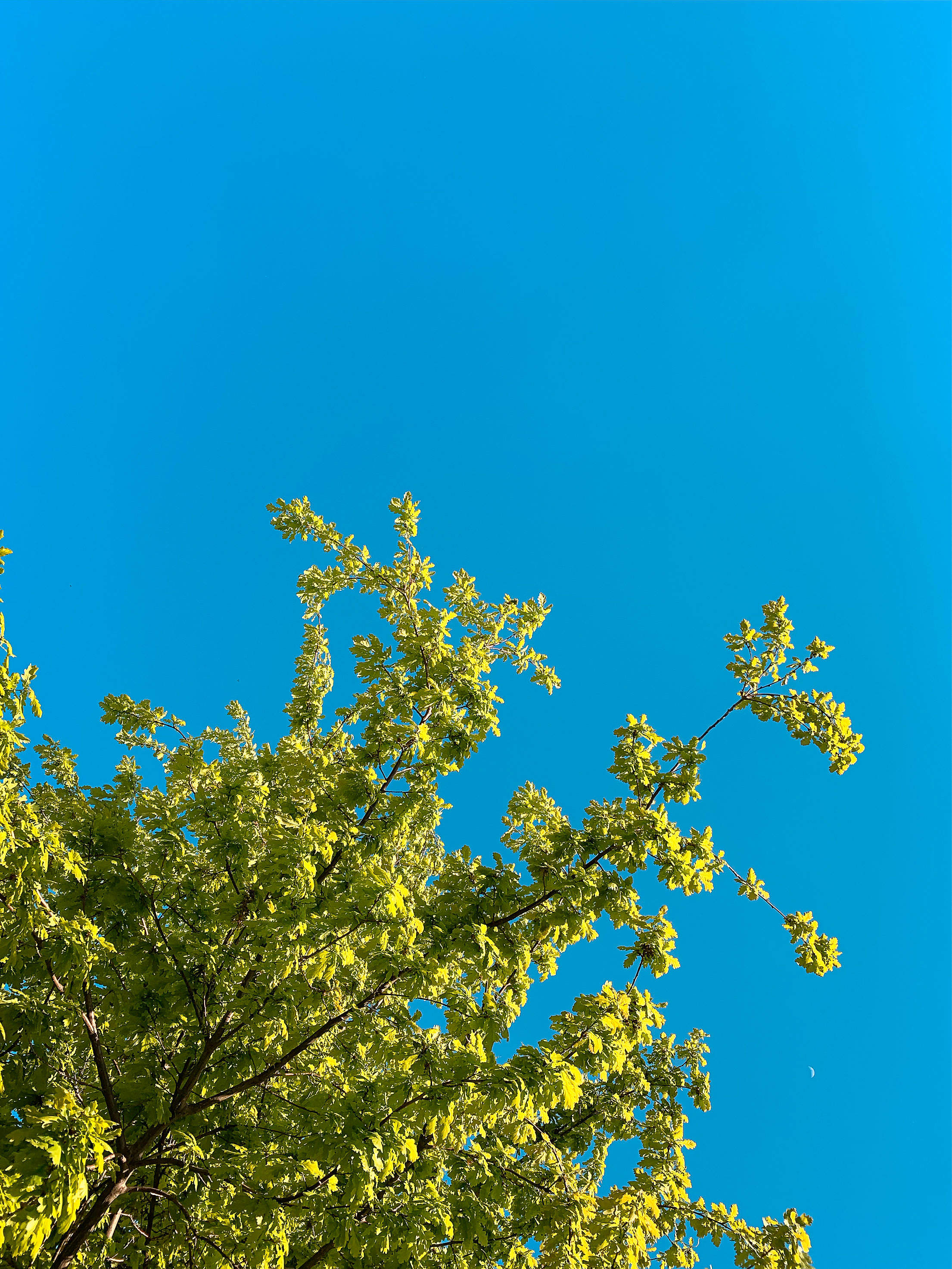 Green Leaves Against Bright Sky Free Stock Photo