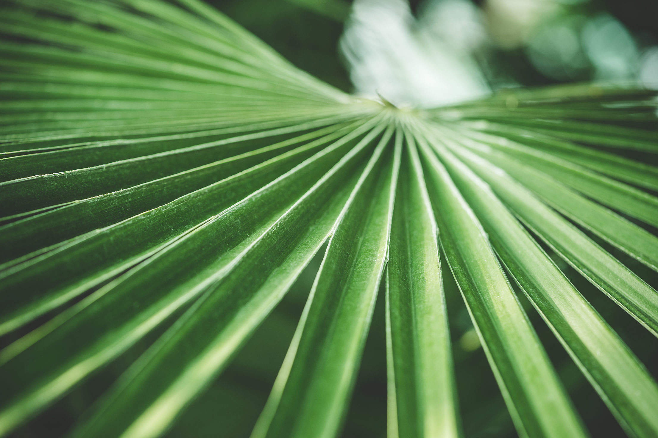 Green Palm Tropical Plant Free Stock Photo