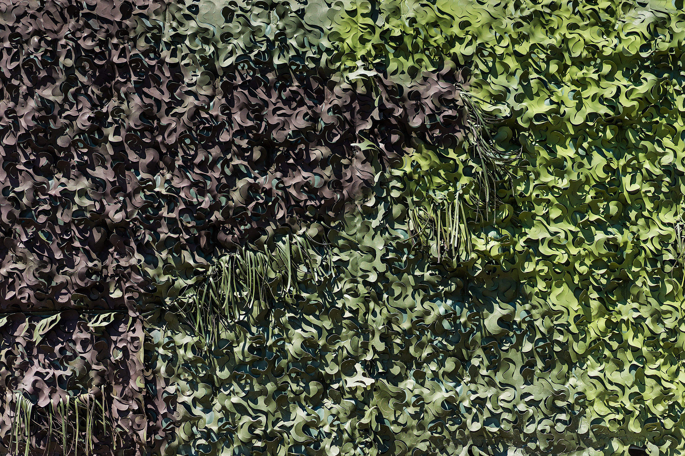 Green Real Army Camouflage Masking Free Stock Photo