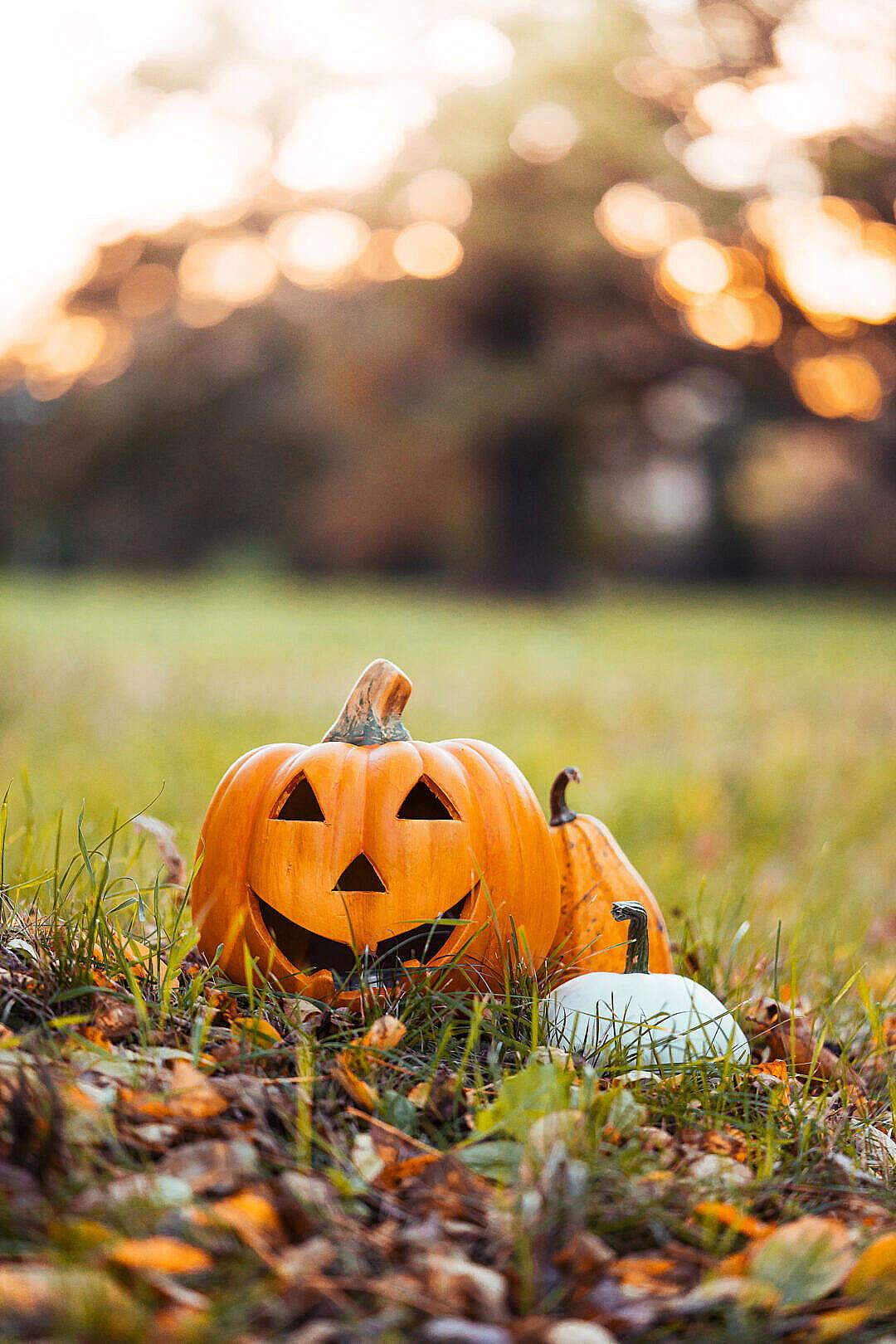 Download Halloween Pumpkins Decorations in Autumn Grass FREE Stock Photo