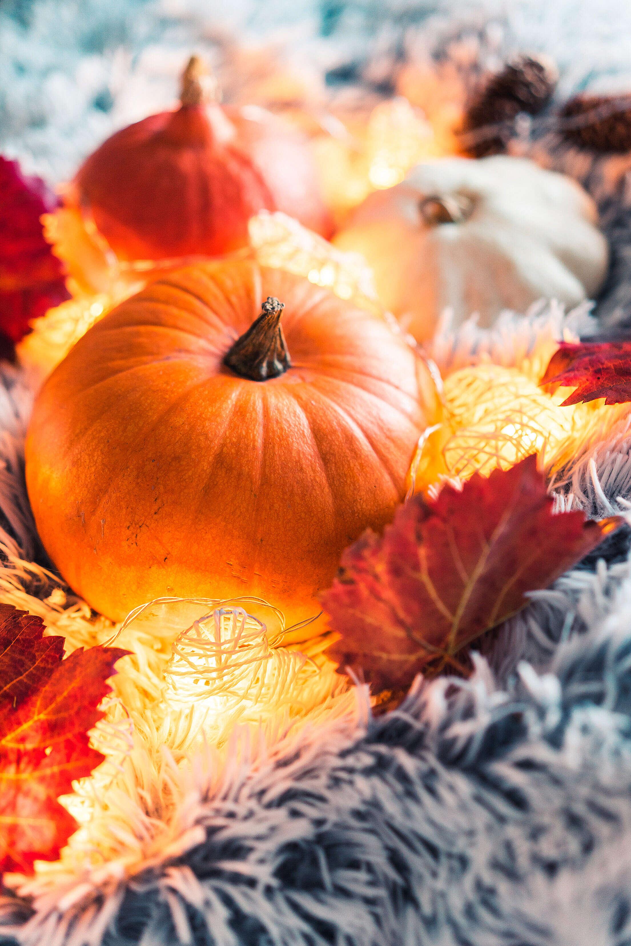Halloween Pumpkins Still Life Free Stock Photo