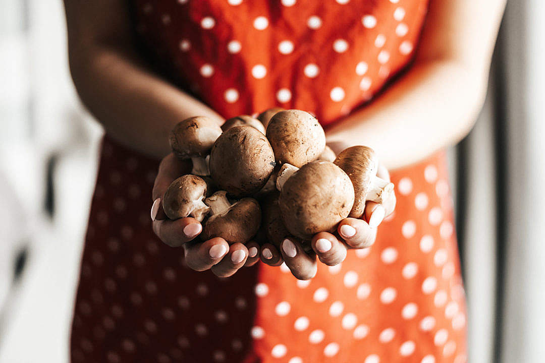 Download Hands Full of Mushrooms FREE Stock Photo