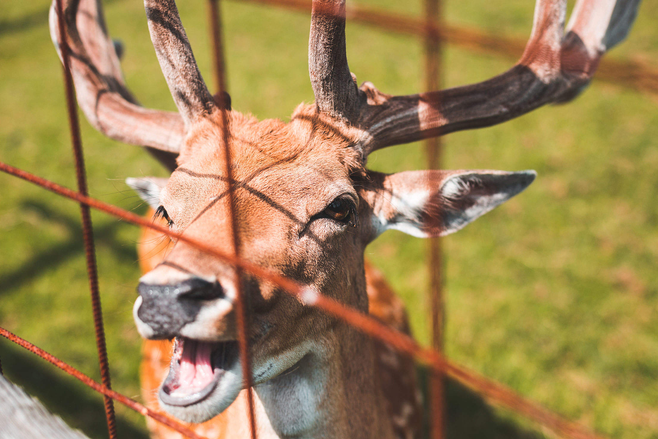 Happy Deer Free Stock Photo