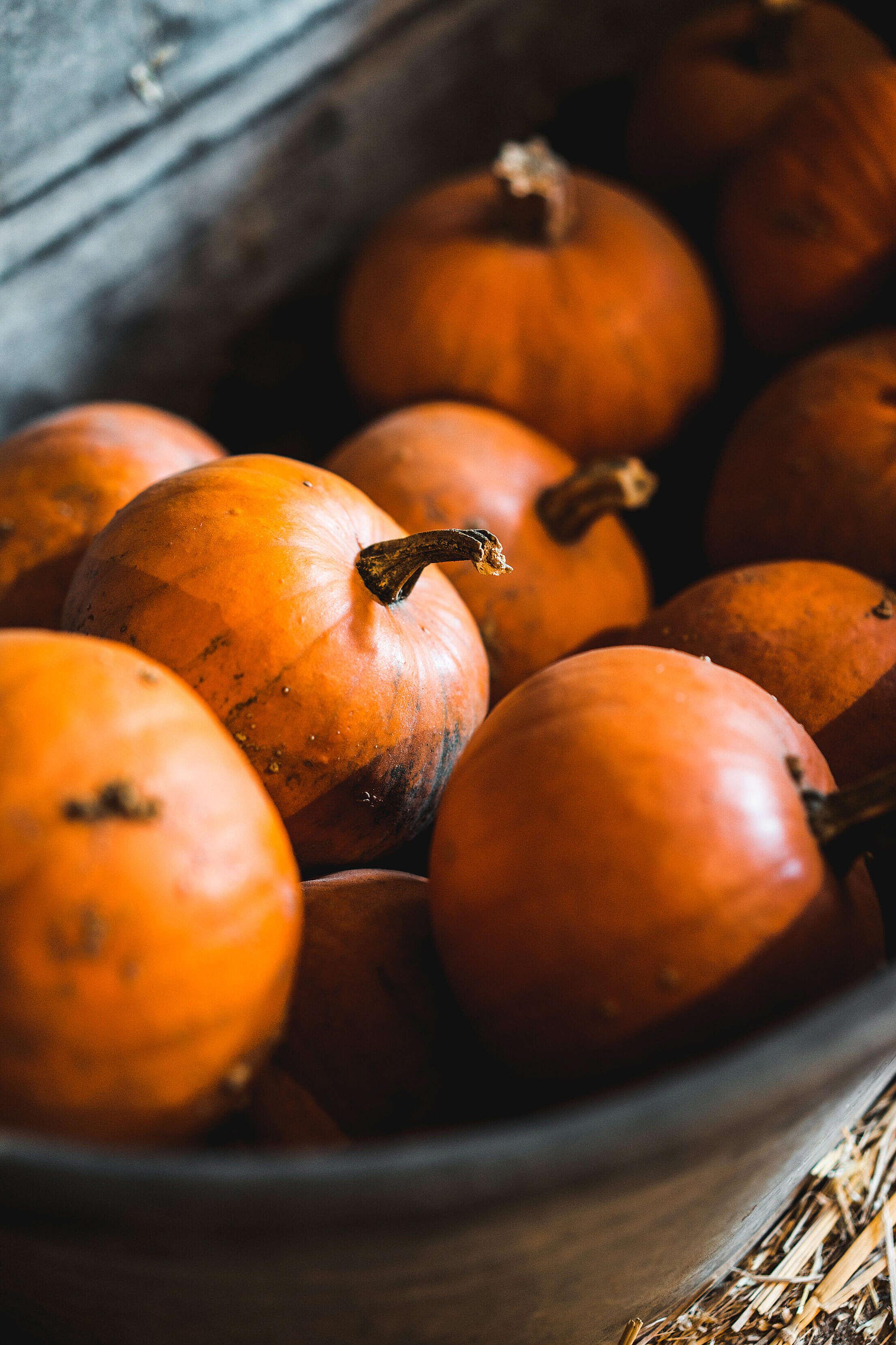 Heap of Pumpkins in a Metal Bath Free Stock Photo
