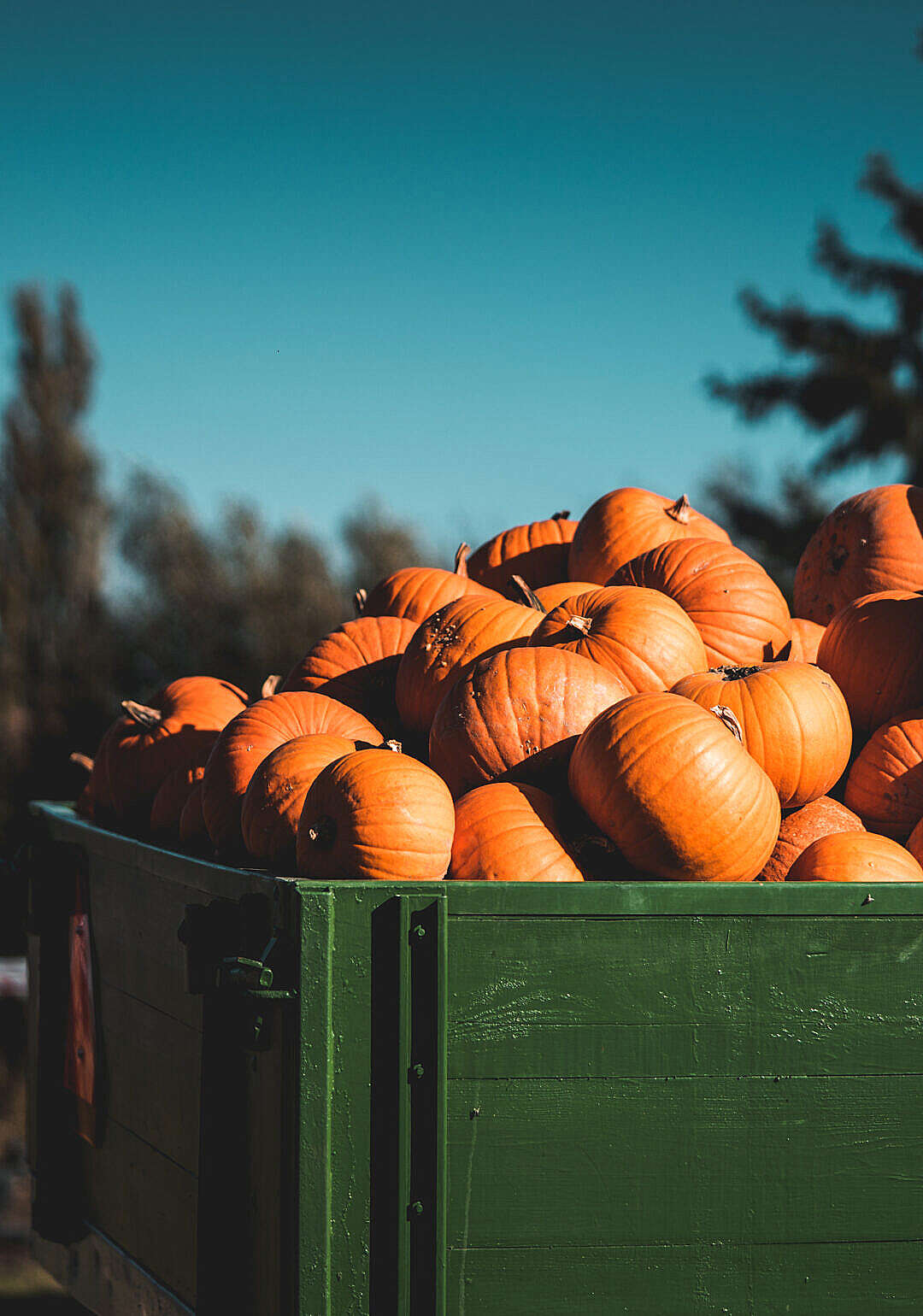 Download Heap of Pumpkins on The Farm Trailer FREE Stock Photo
