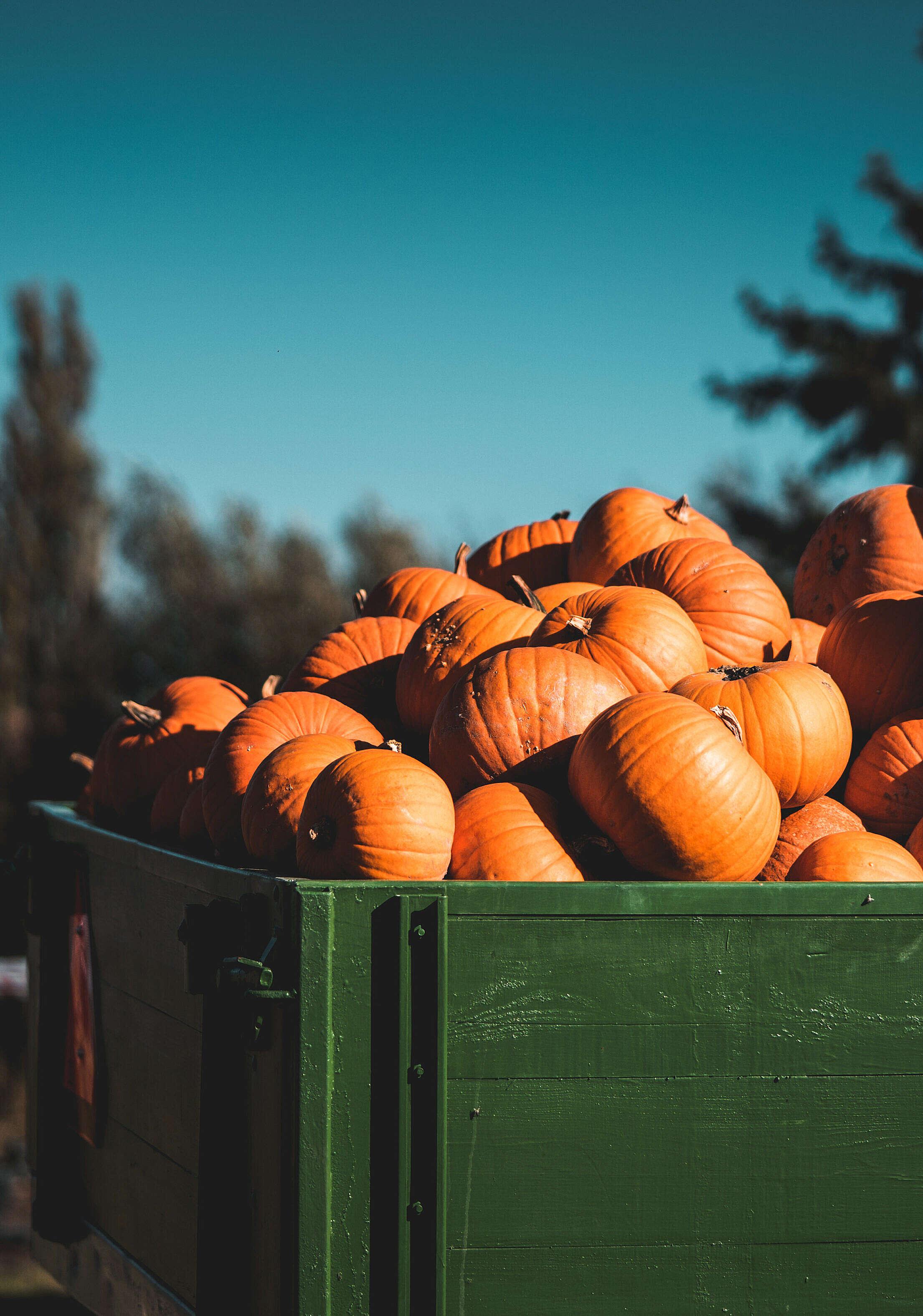 Heap of Pumpkins on The Farm Trailer Free Stock Photo