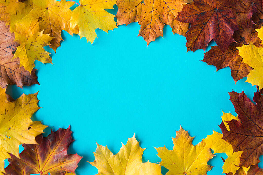 Download Hero Image Autumn Leaves on Flat Blue Background #2 FREE Stock Photo