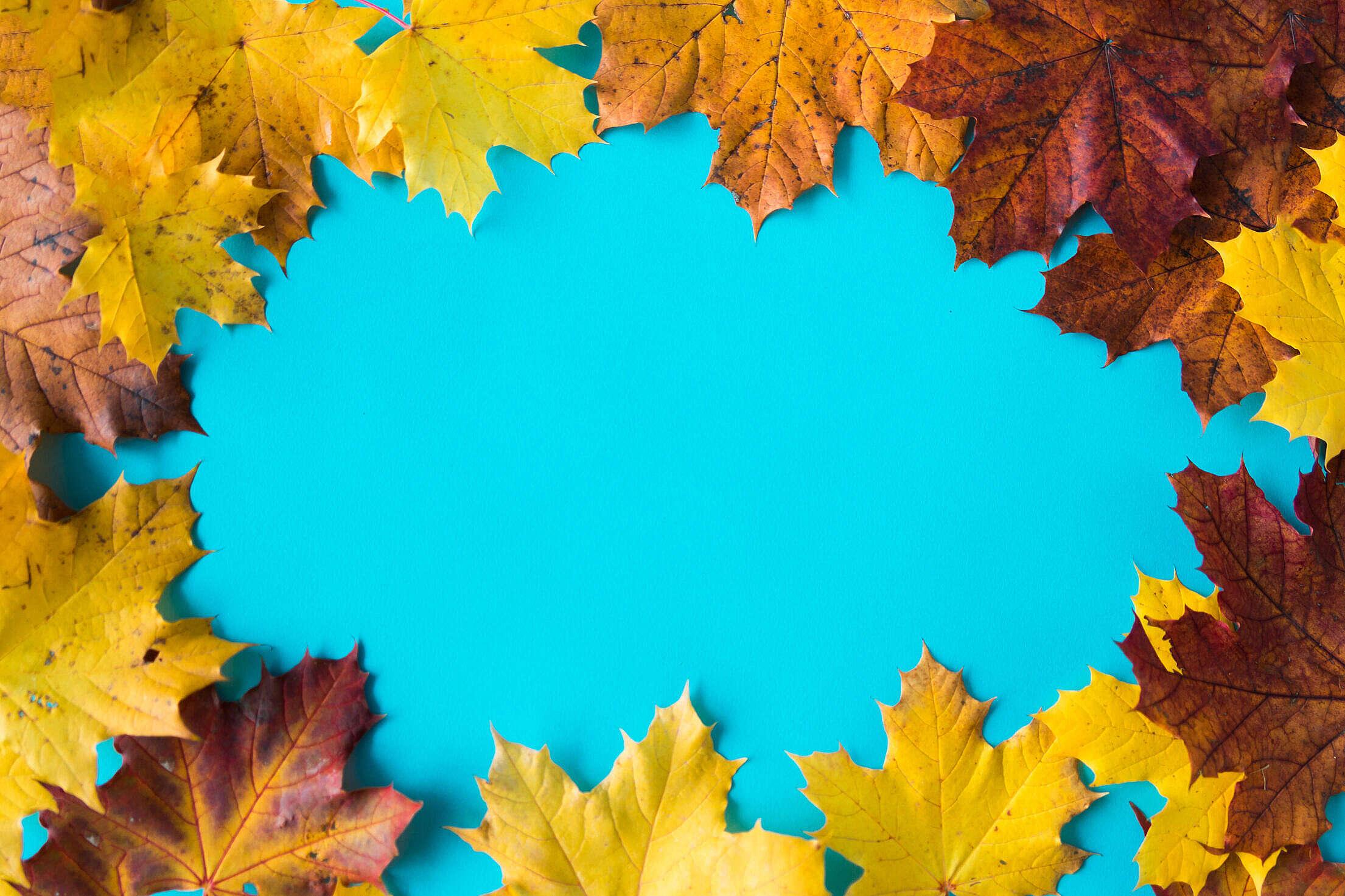 Hero Image Autumn Leaves on Flat Blue Background #2 Free Stock Photo