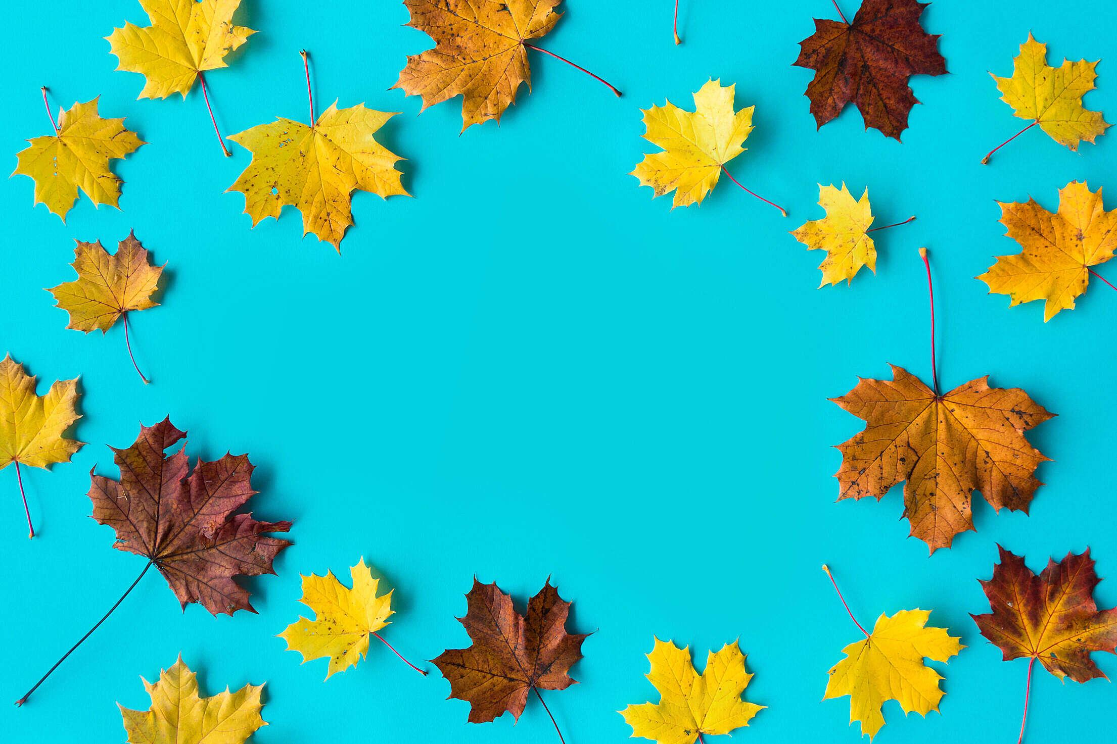 Hero Image Autumn Leaves on Flat Blue Background Free Stock Photo