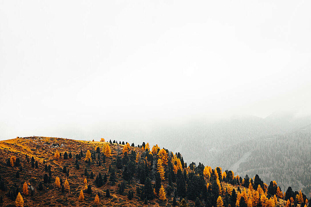Download Hill Full of Fall Yellow Trees FREE Stock Photo