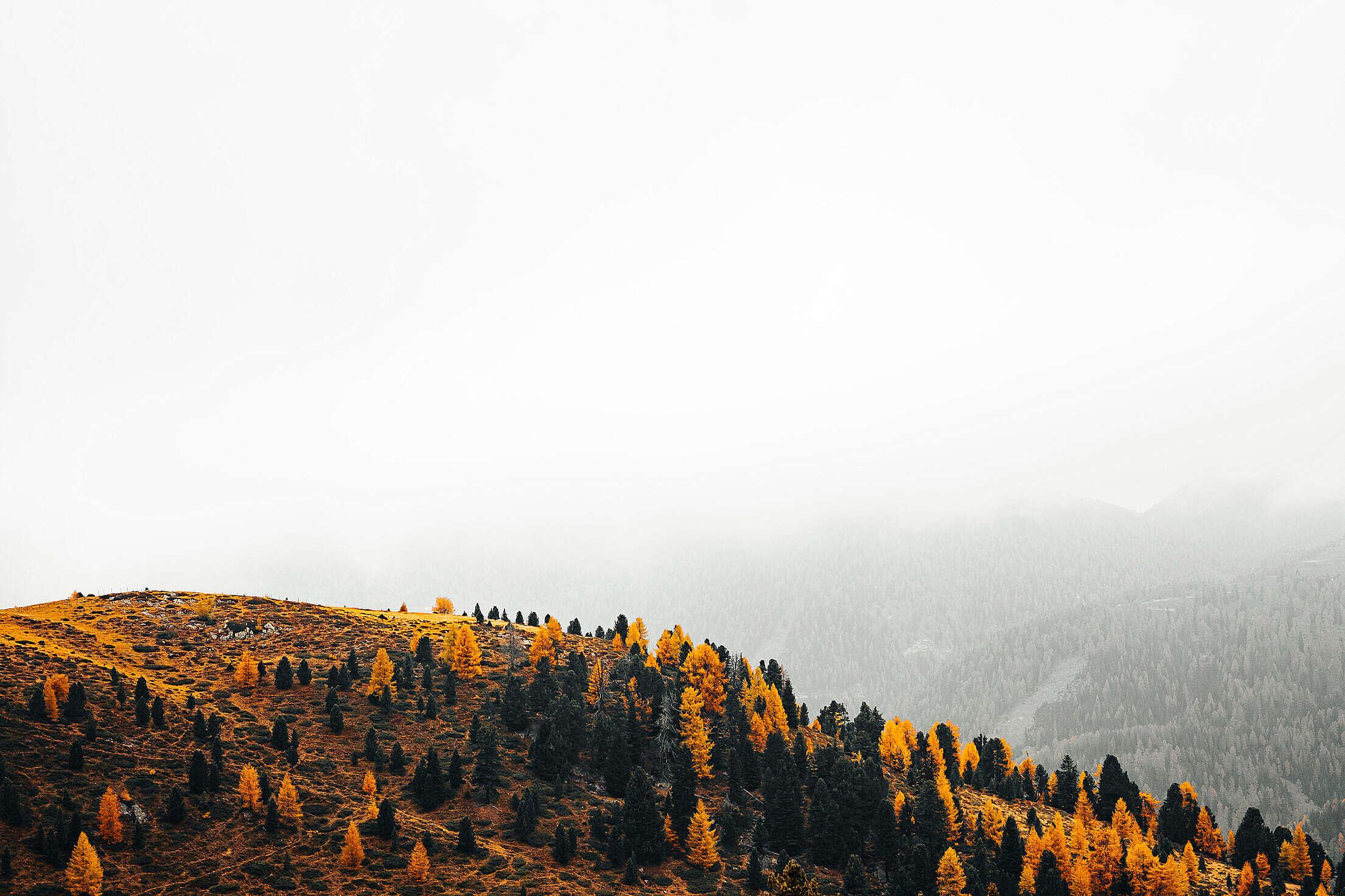Hill Full of Fall Yellow Trees Free Stock Photo