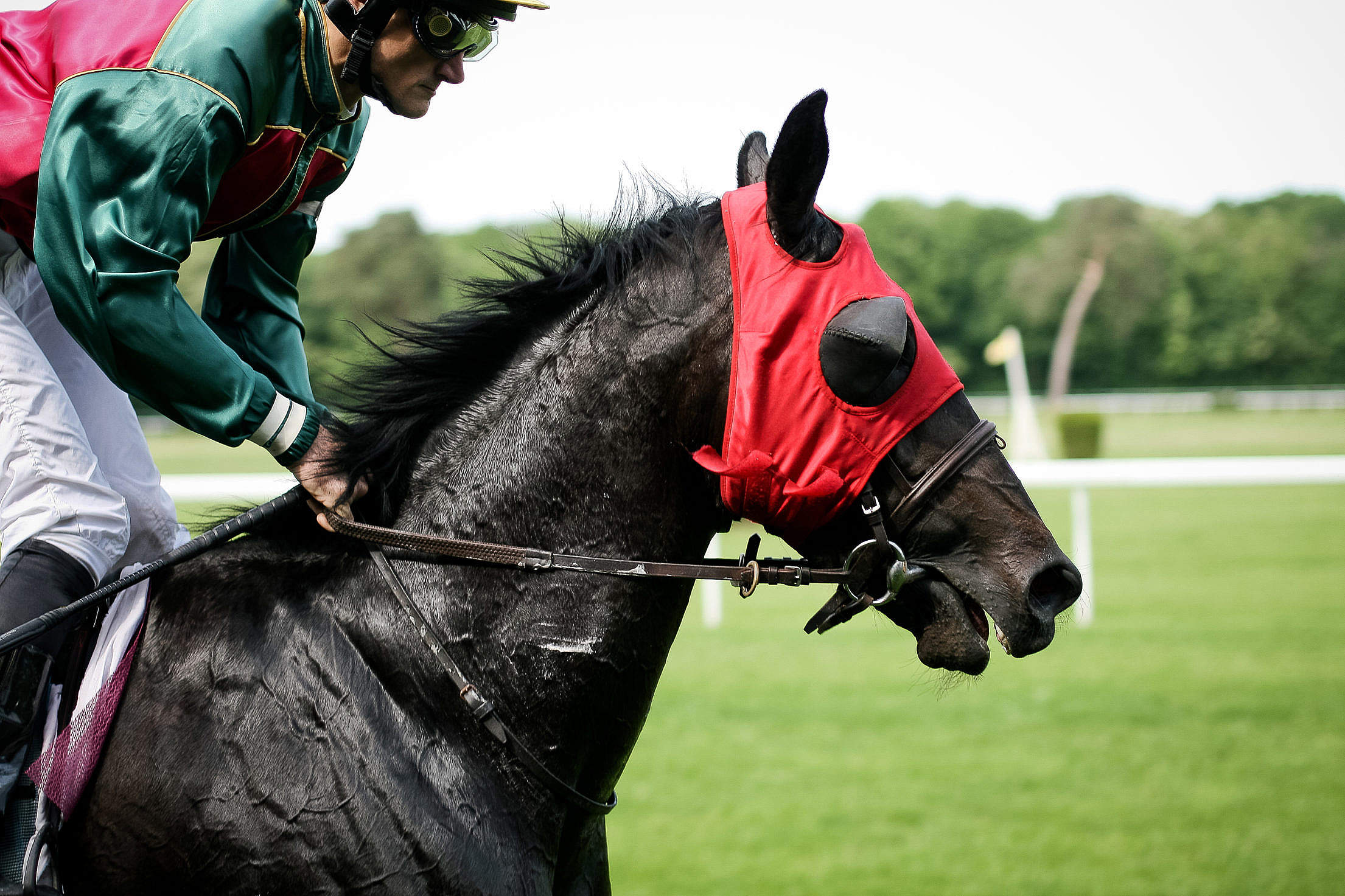 Horse Racing Free Stock Photo