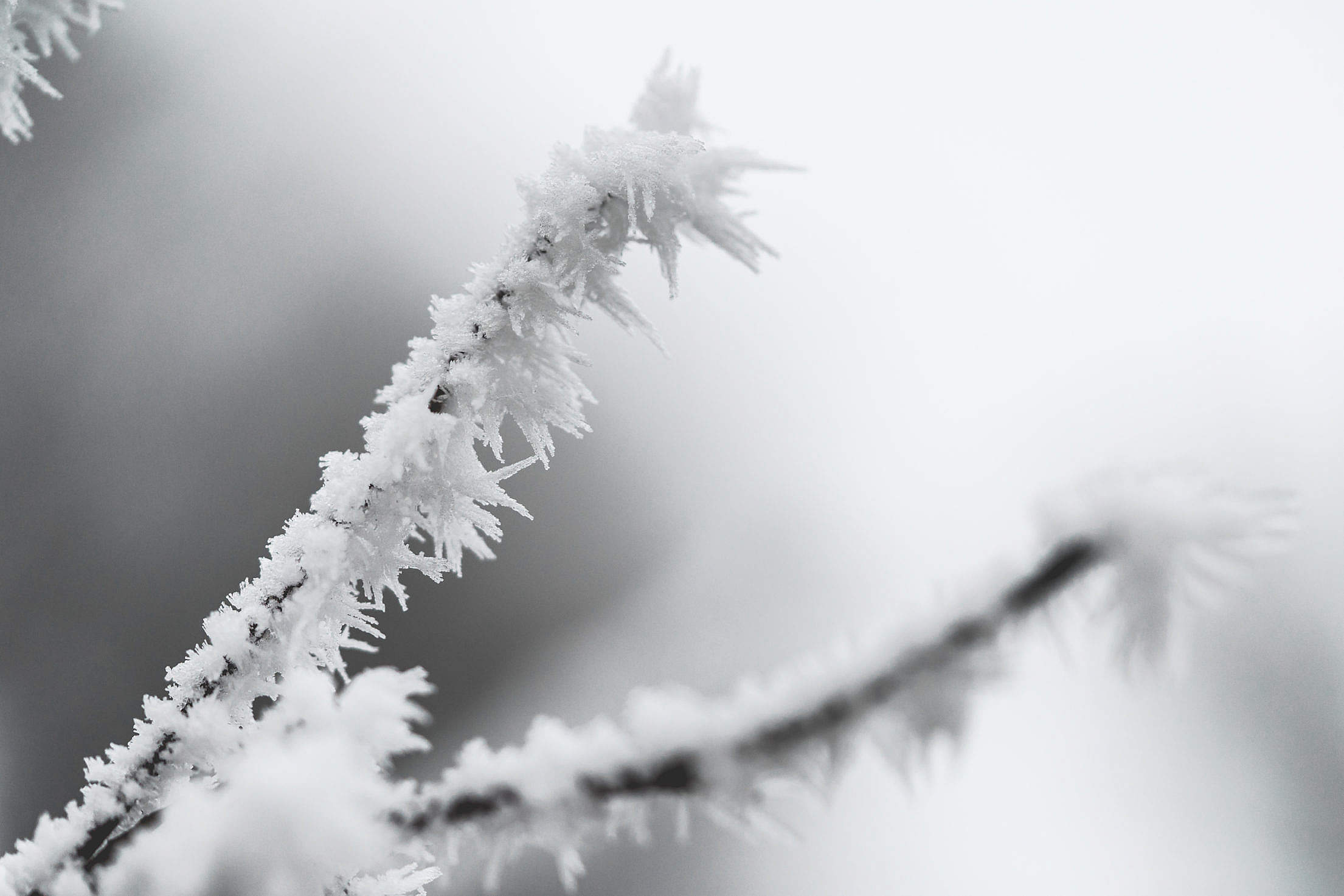 Ice Hoarfrost on a Branch Free Stock Photo