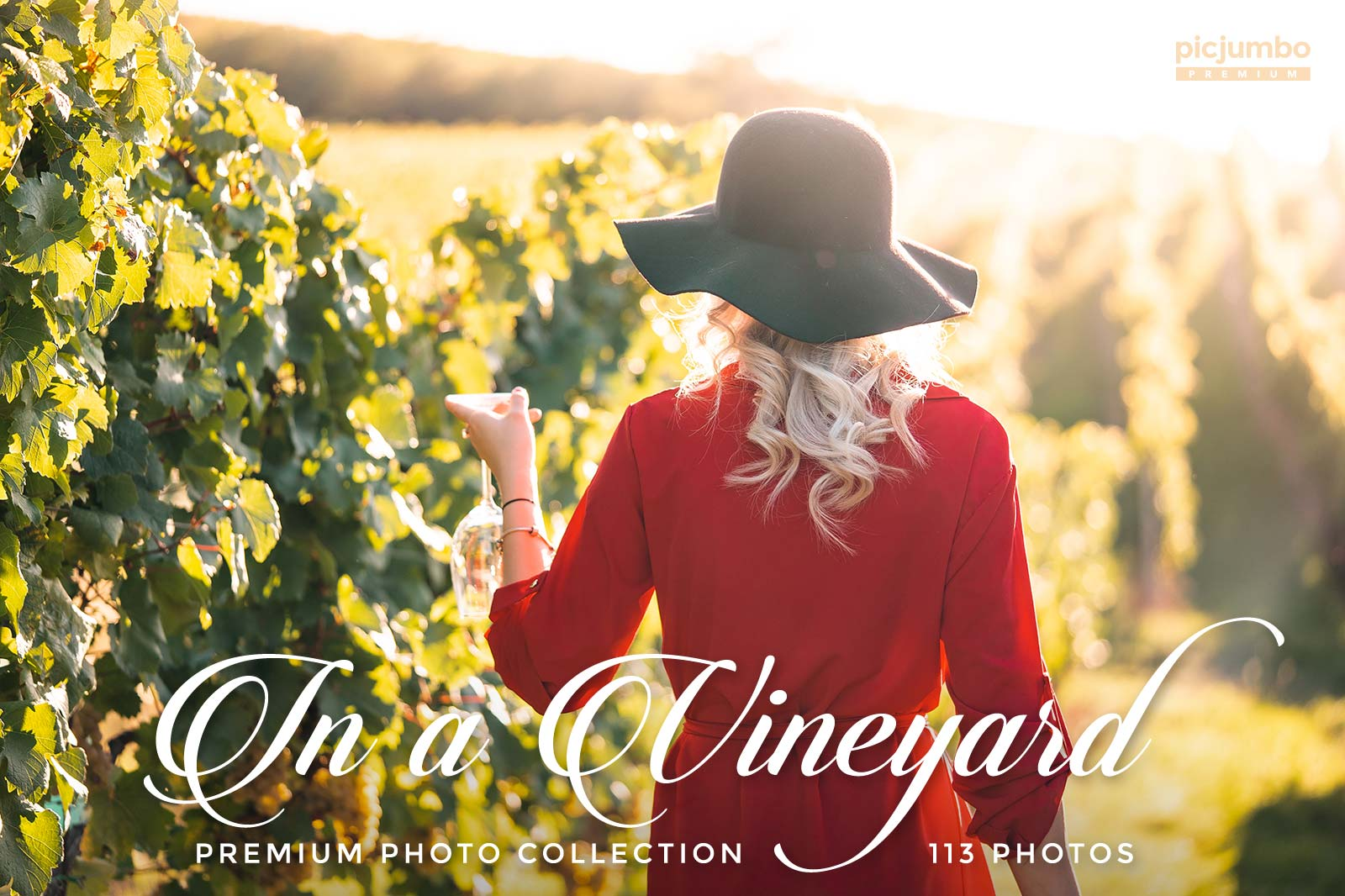 Click here to see In a Vineyard PREMIUM Collection!