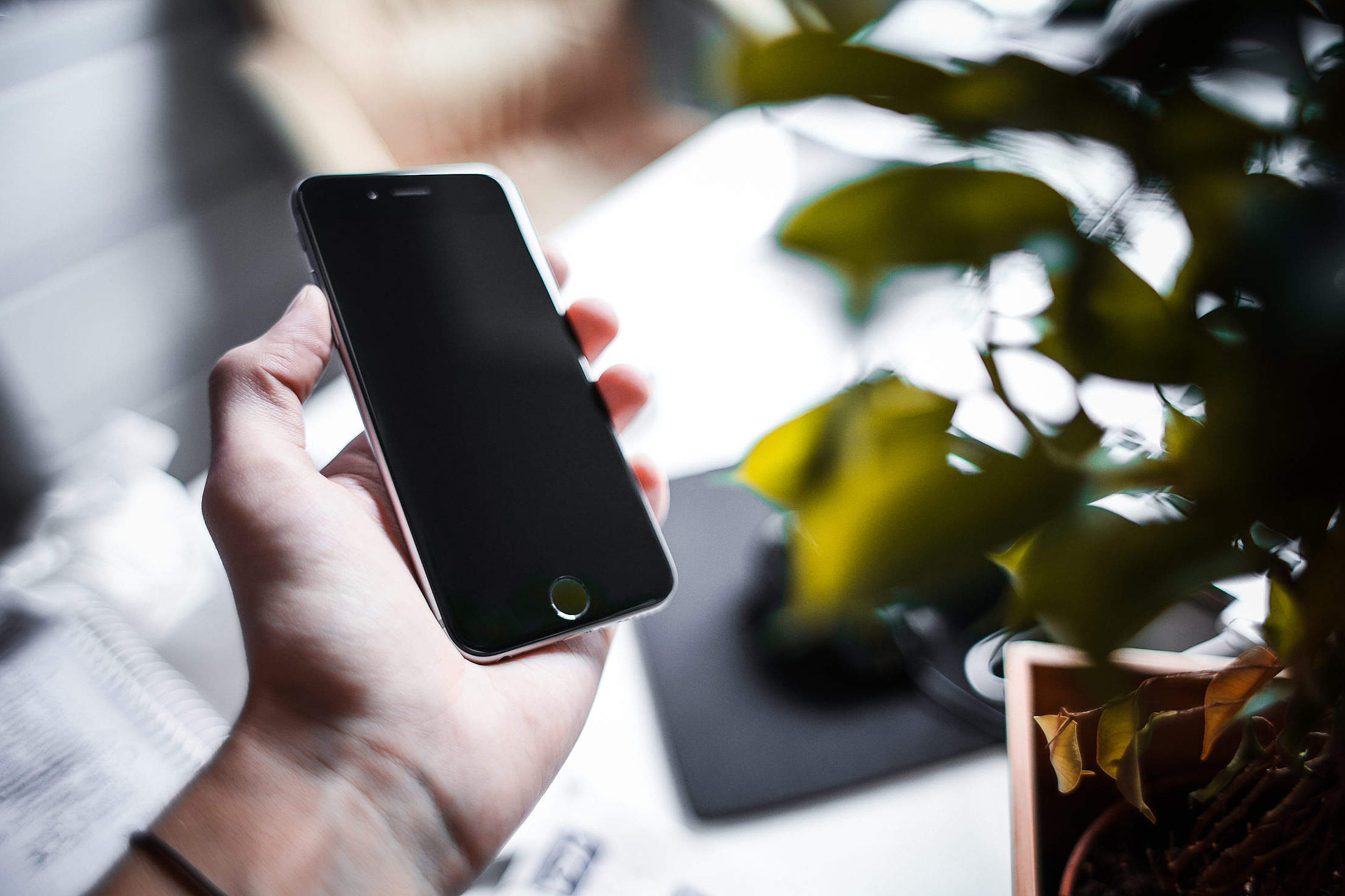 iPhone 6 Space Gray in Green Leaves Free Stock Photo