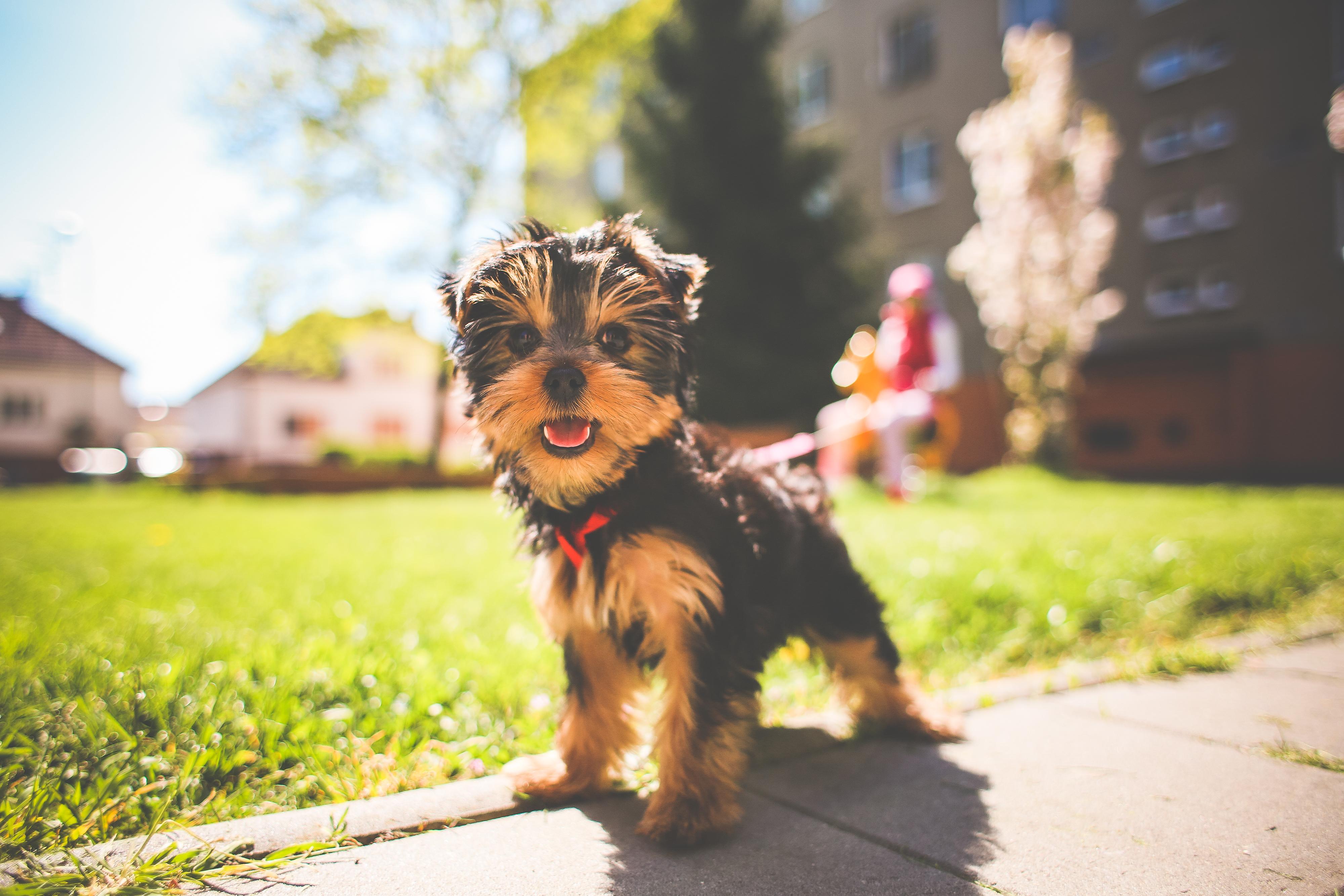 Jessie the Puppy Free Stock Photo
