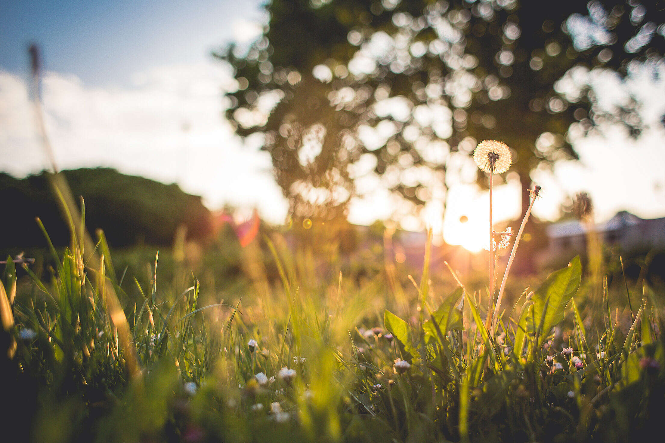 Just Another Grass Sunset Free Stock Photo
