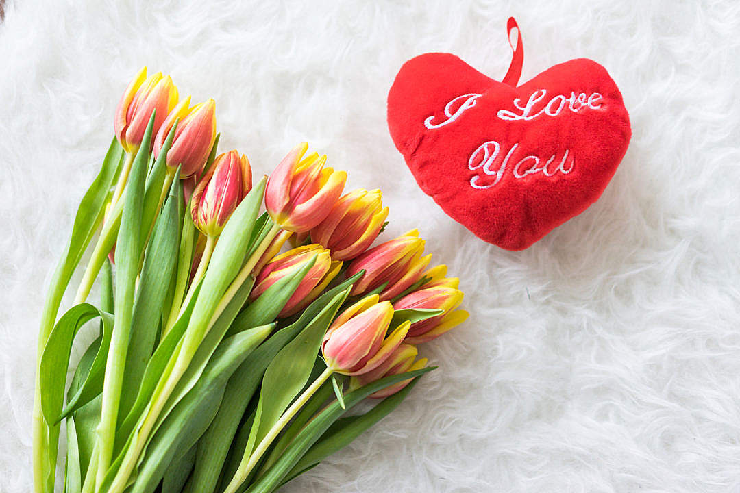 Download Kees Nelis Tulips With Plush I Love You Heart FREE Stock Photo
