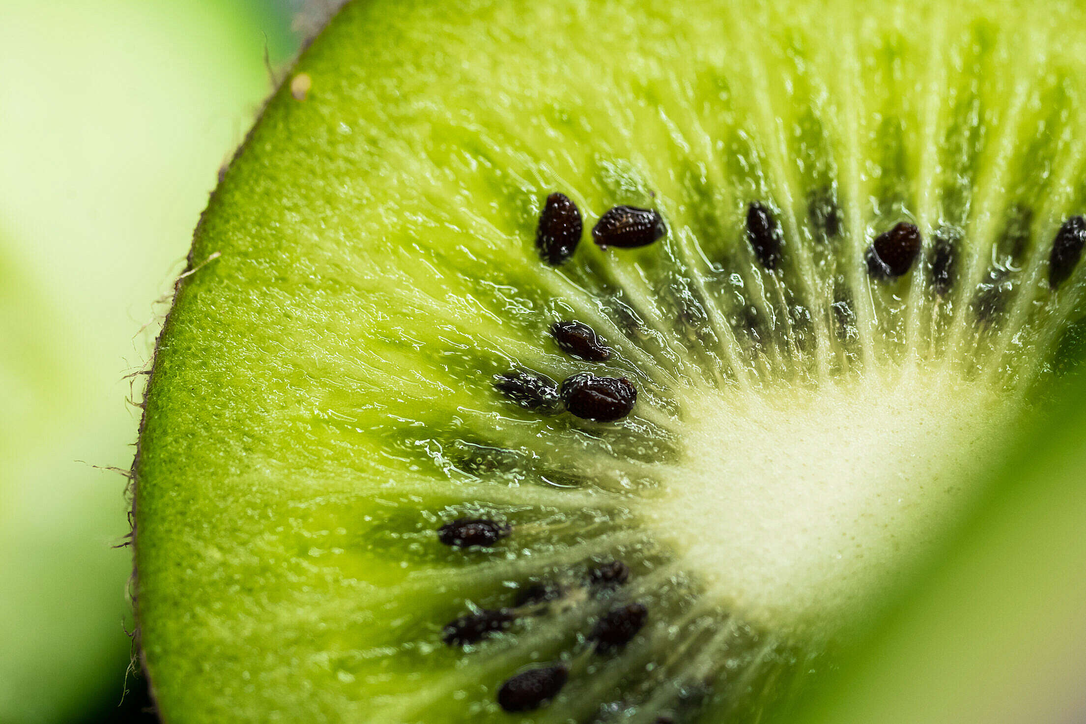 (click to download) Kiwi Macro FREE Stock Photo