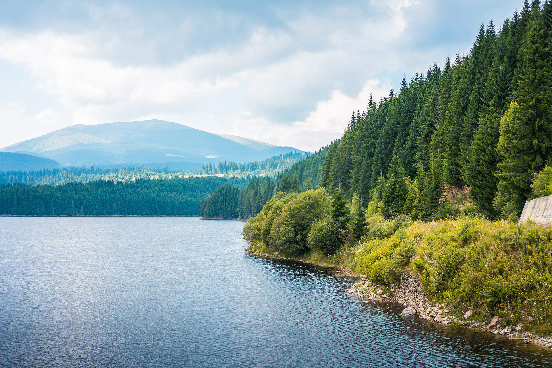 Lake Shore and Forests Scenery in Romania Free Stock Photo