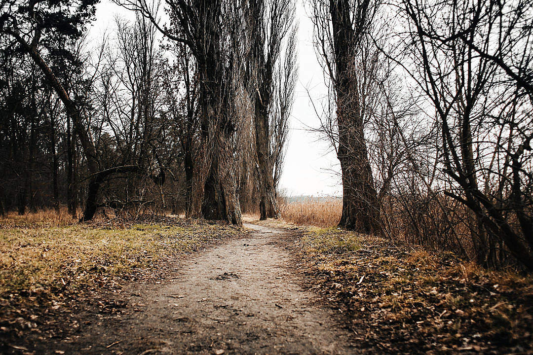 Download Lakeside Autumn/Winter Path FREE Stock Photo