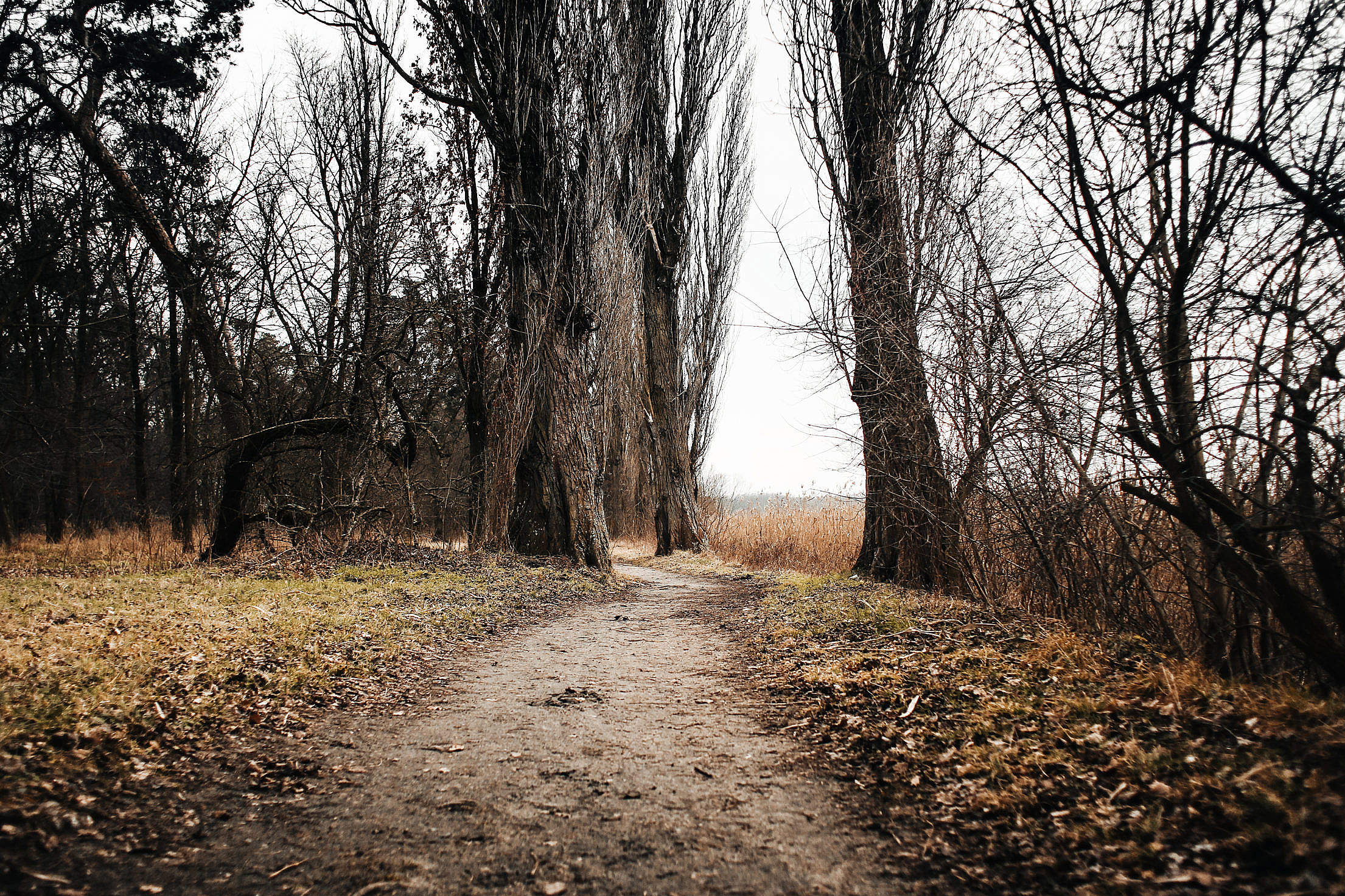 Lakeside Autumn/Winter Path Free Stock Photo