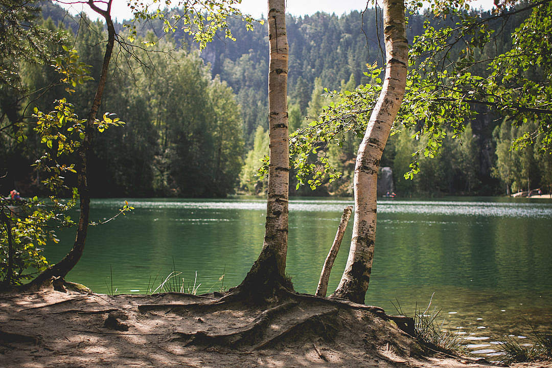 Download Lakeside Nature in Czech Republic FREE Stock Photo