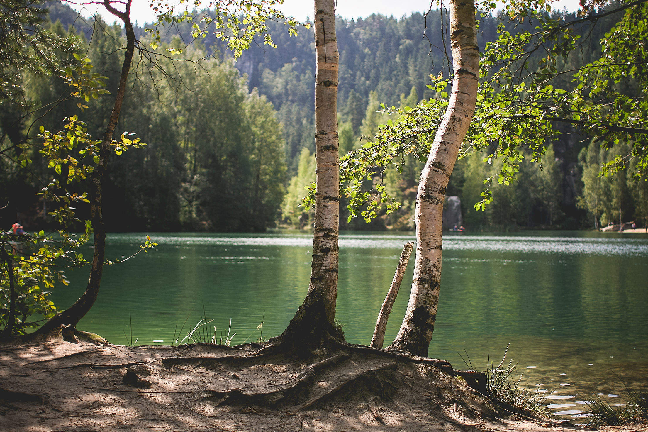 Lakeside Nature in Czech Republic Free Stock Photo