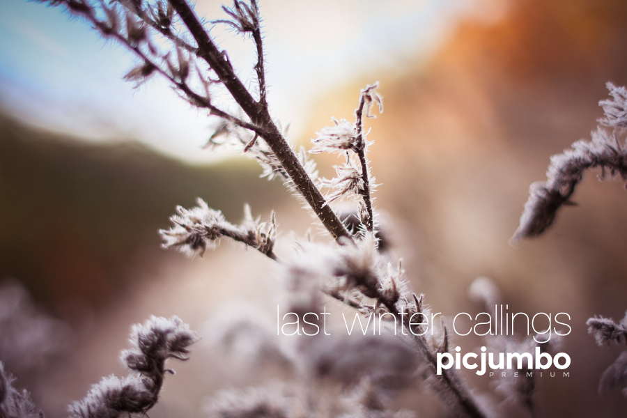 Last Winter Callings — Join PREMIUM and get instant access to this collection!