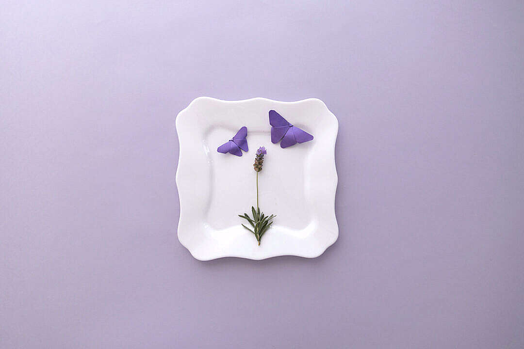 Download Lavender Flat Lay Flower and Butterflies FREE Stock Photo