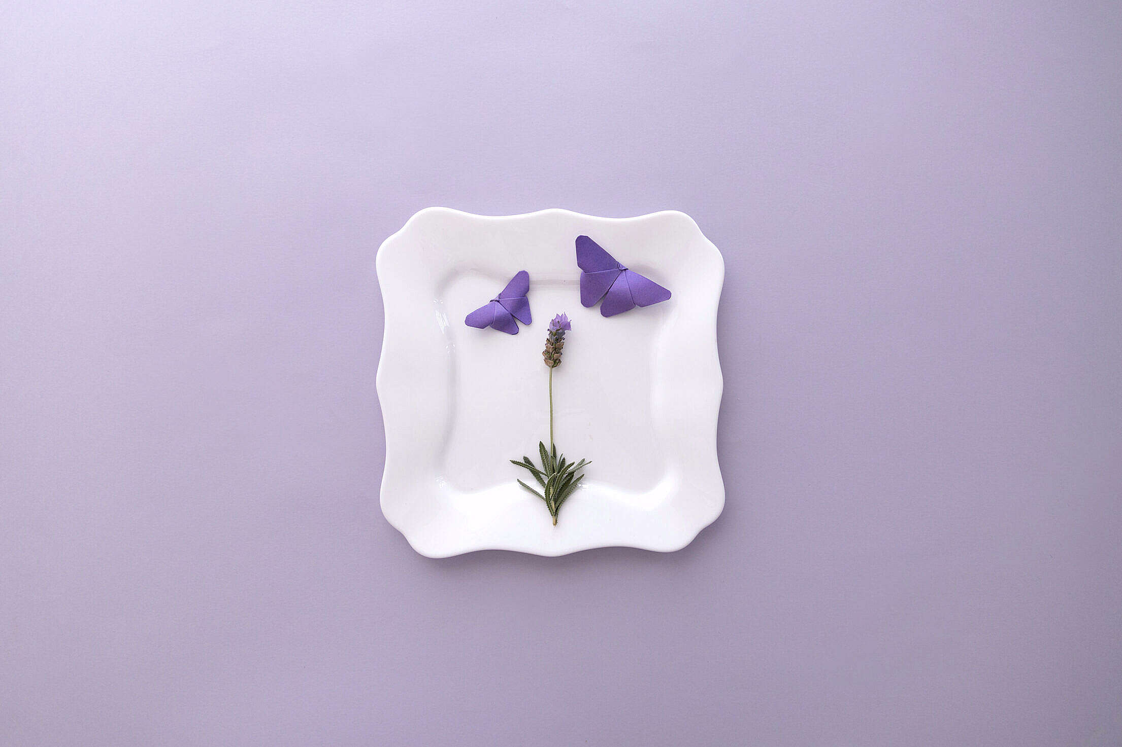 Lavender Flat Lay Flower and Butterflies Free Stock Photo
