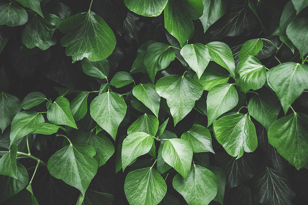 Download Leaf Leaves Background FREE Stock Photo