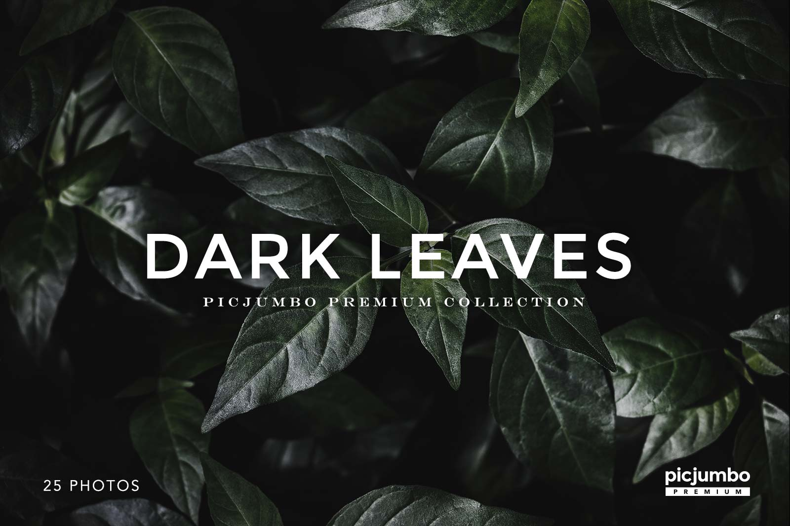Dark Leaves — get it now in picjumbo PREMIUM!