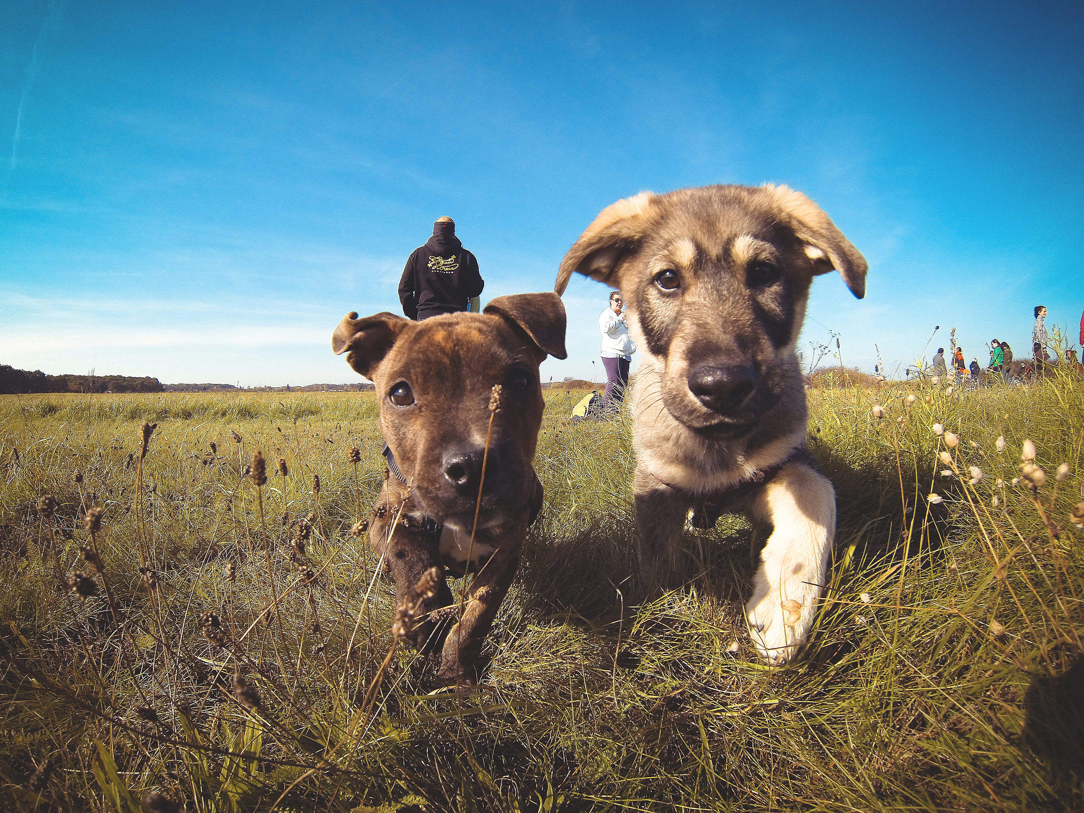 Little Puppies Friends Free Stock Photo