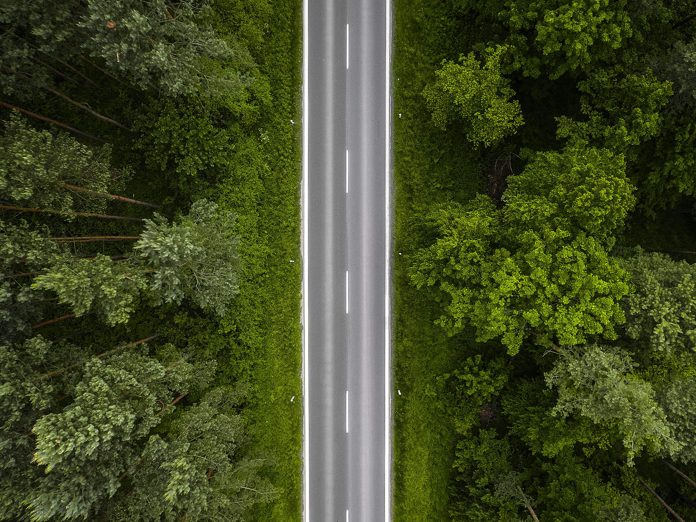 Lonely Road in the Woods Aerial Free Stock Photo