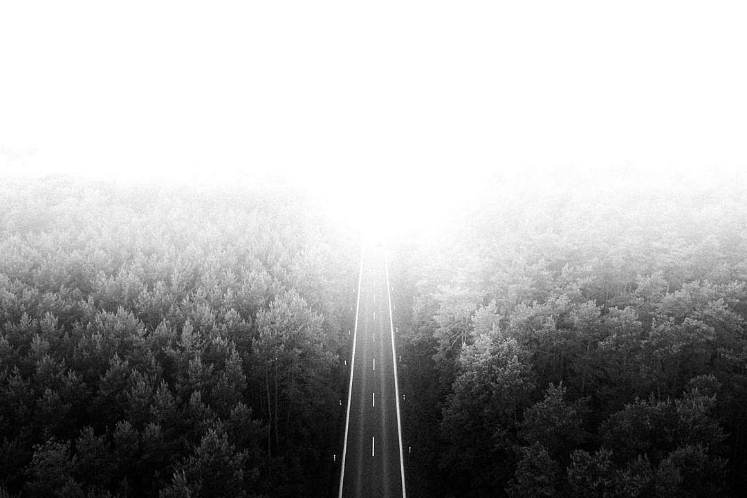Download Long Lonely Road Through The Woods FREE Stock Photo