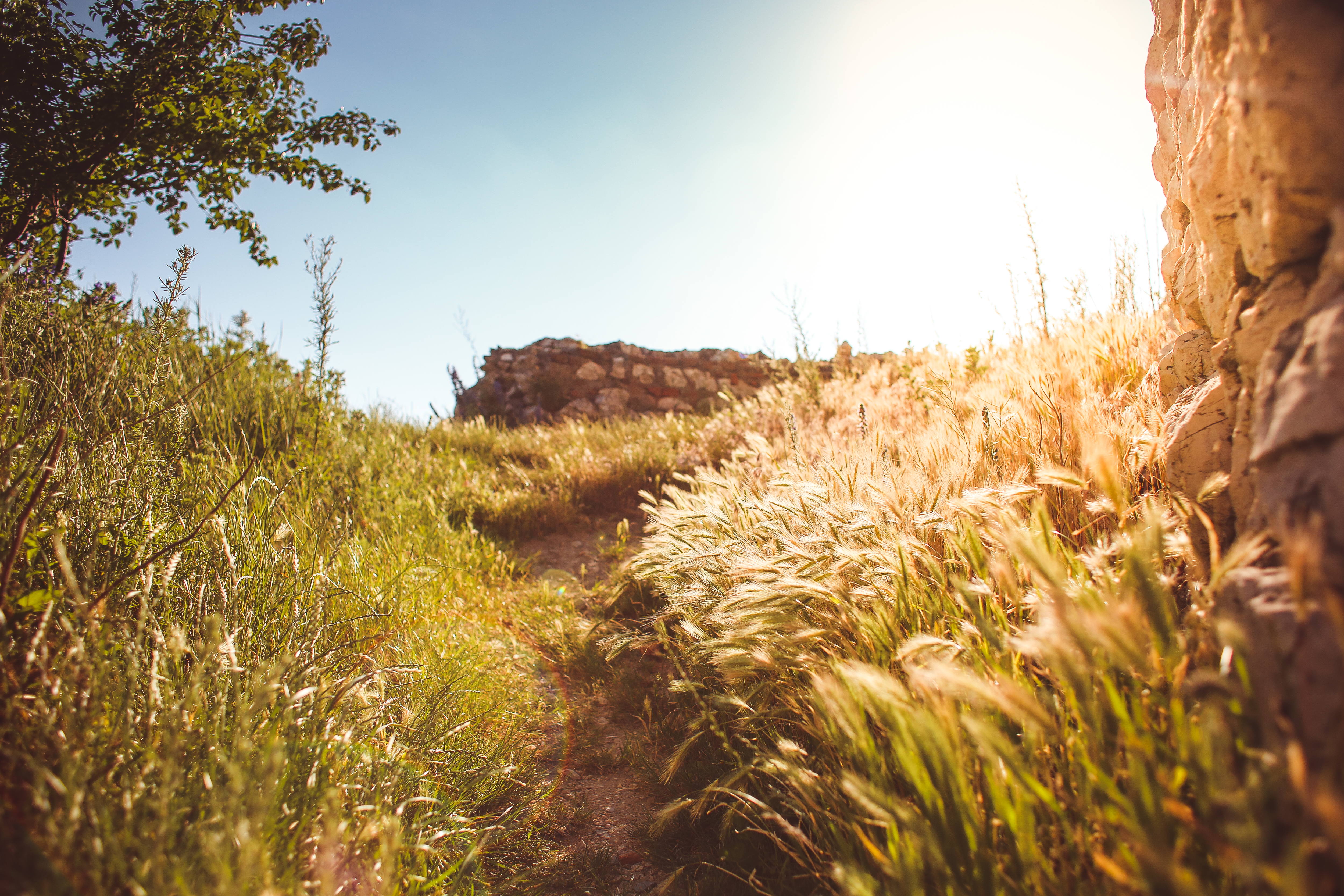 Long Path in Grass Free Stock Photo