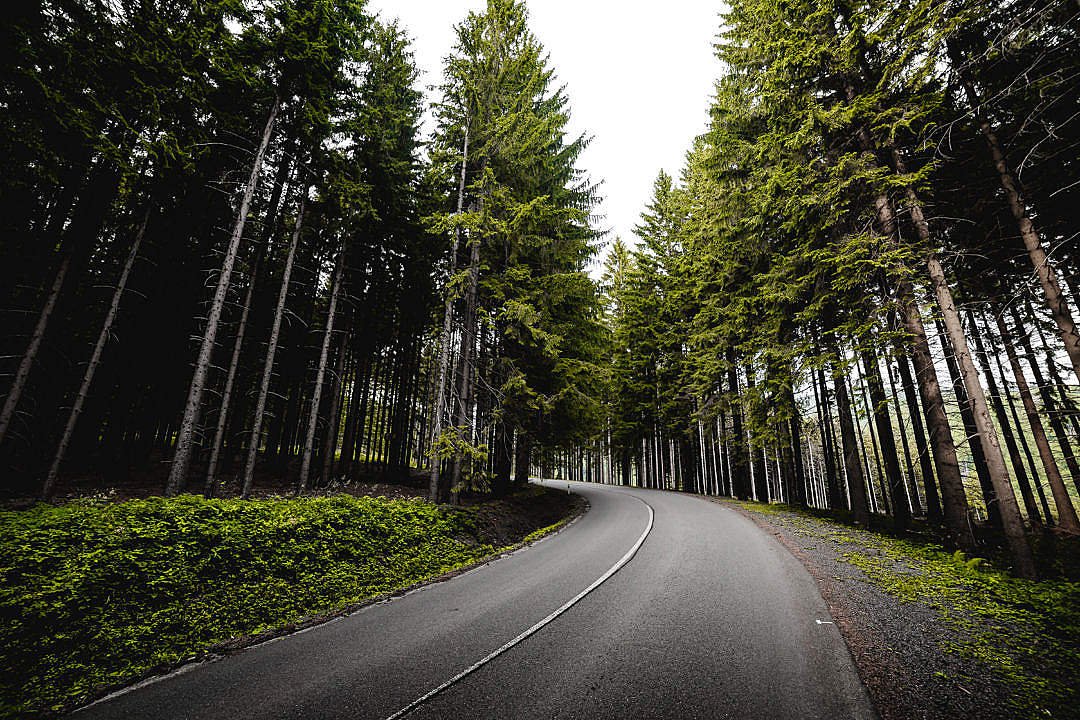 Download Long Road in Forest FREE Stock Photo