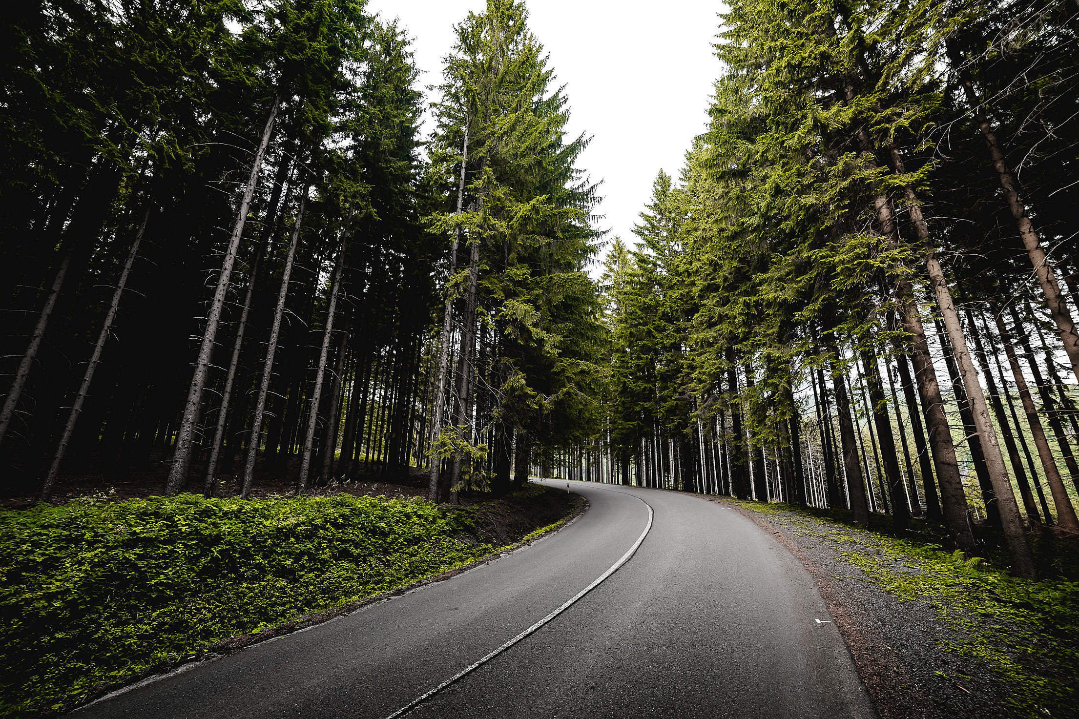 Long Road in Forest Free Stock Photo