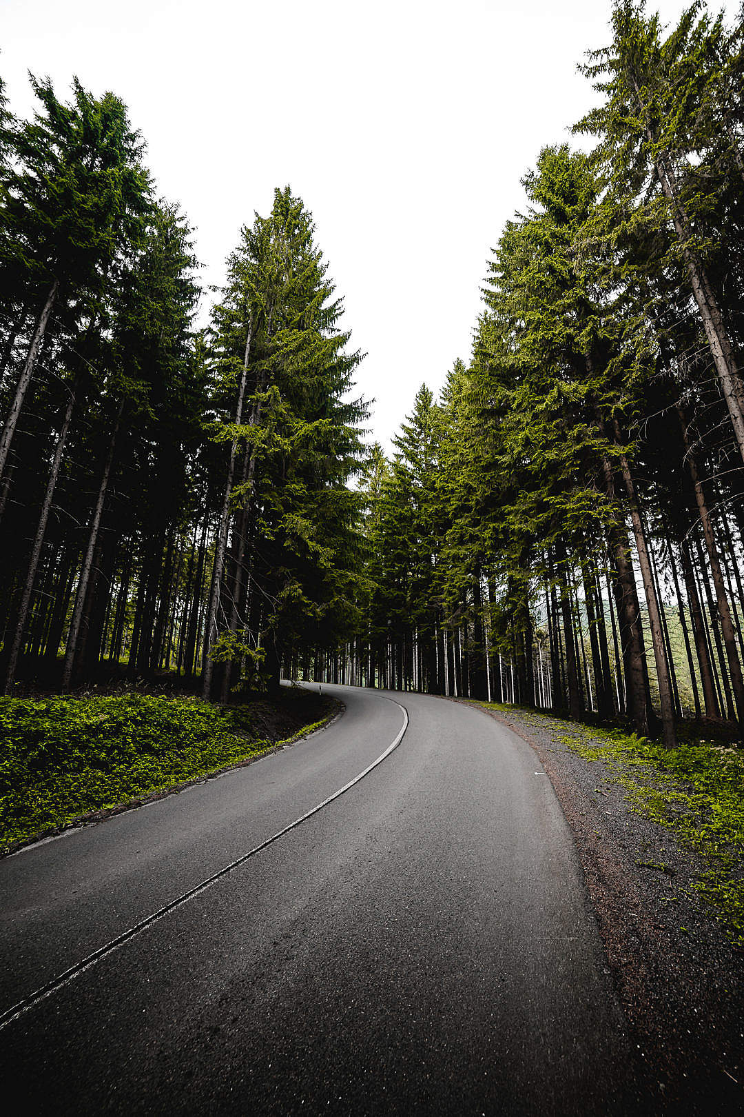 Download Long Road in Forest Vertical FREE Stock Photo