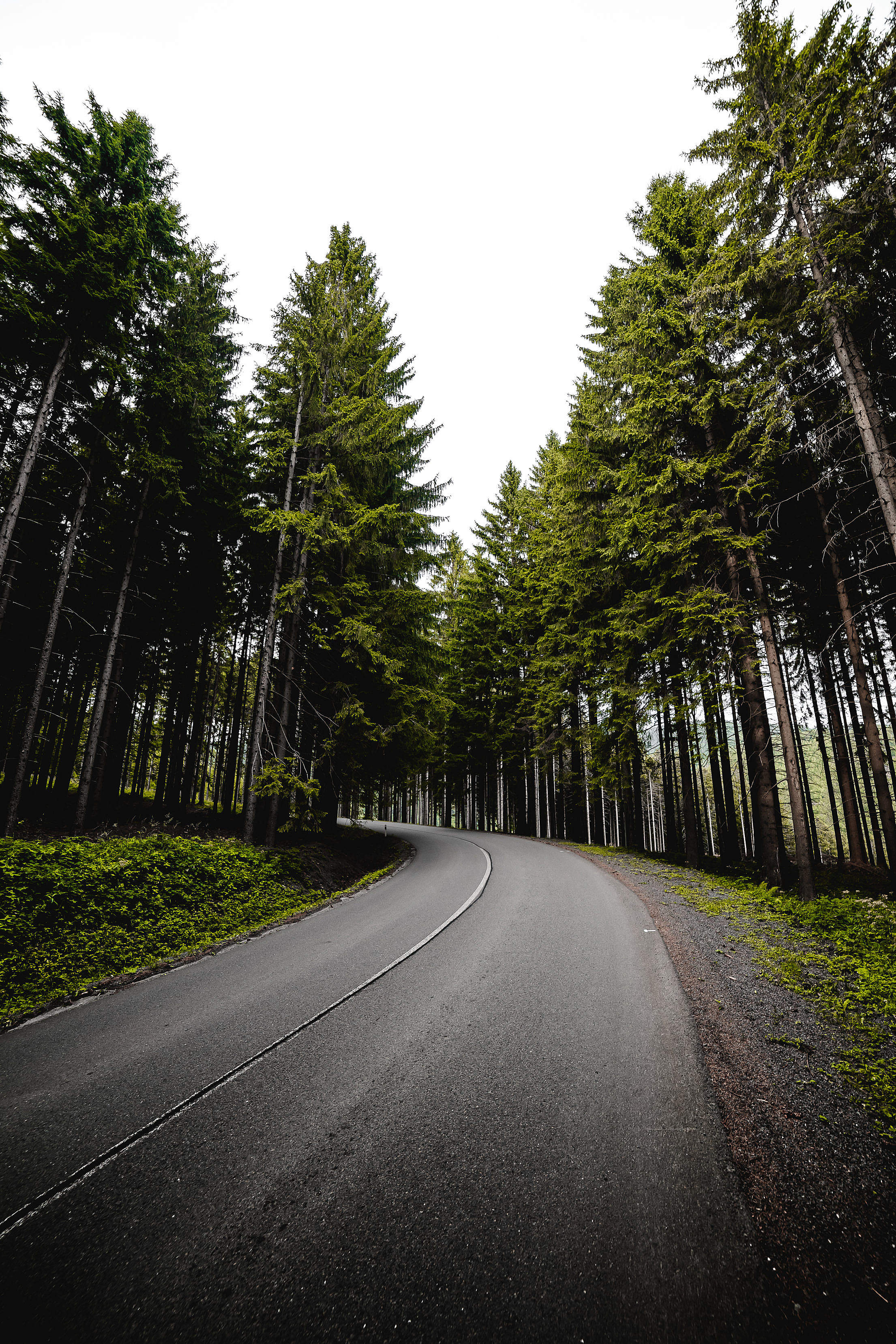Long Road in Forest Vertical Free Stock Photo